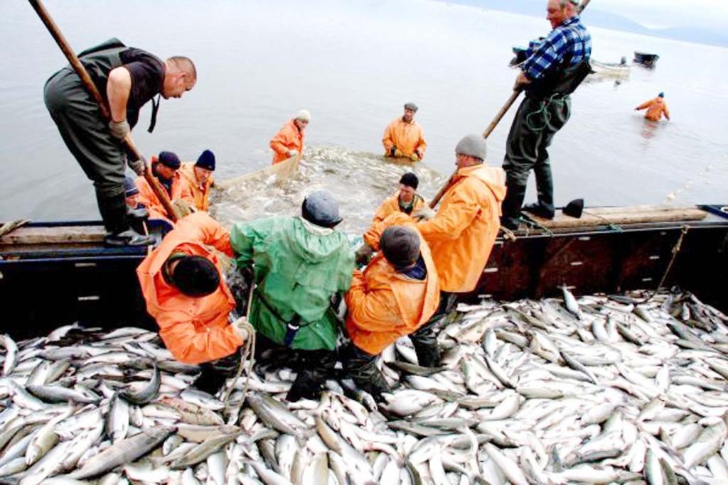 сезонная работа на сахалине рыбак