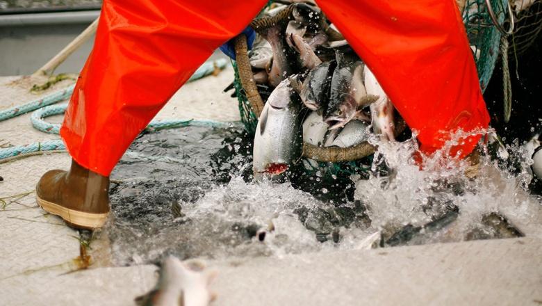 ловля лосося в японии